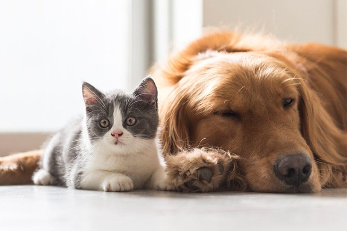 HUMANIZAÇÃO DOS PETS: O QUE É, QUAIS OS BENEFÍCIOS E RISCOS?